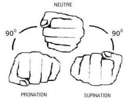 pronation-et-supination.jpg